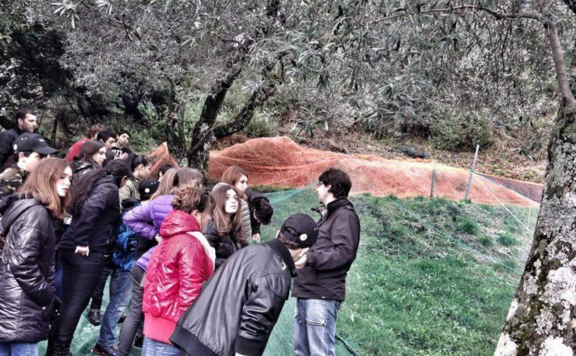 I cullighjenti à a scuperta di l'alivu in Santa Lucia di Tallà