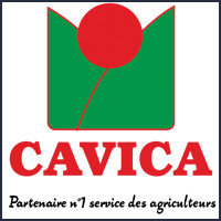 Cavica